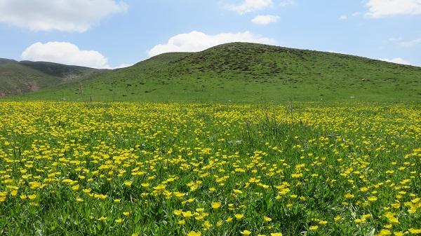 تصویر از منطقه زنوز – مرند – آذربایجان شرقی