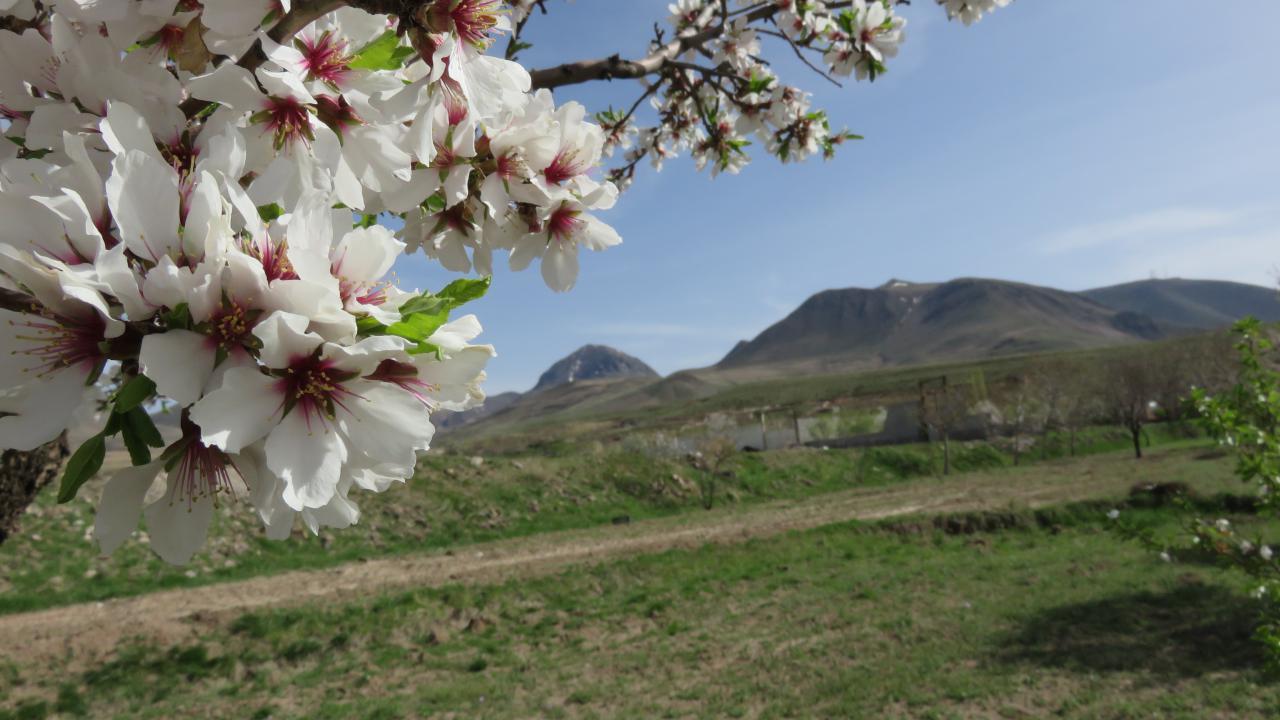 تصویر از قیبله داغی – آذرشهر